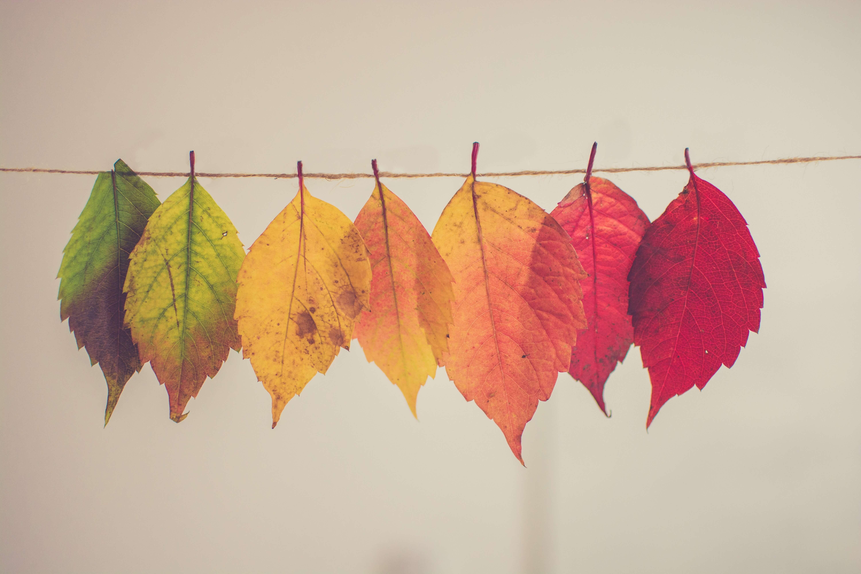 糸に通した落ち葉