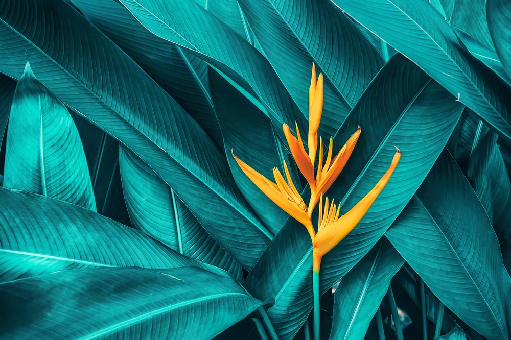緑の葉とオレンジの枝
