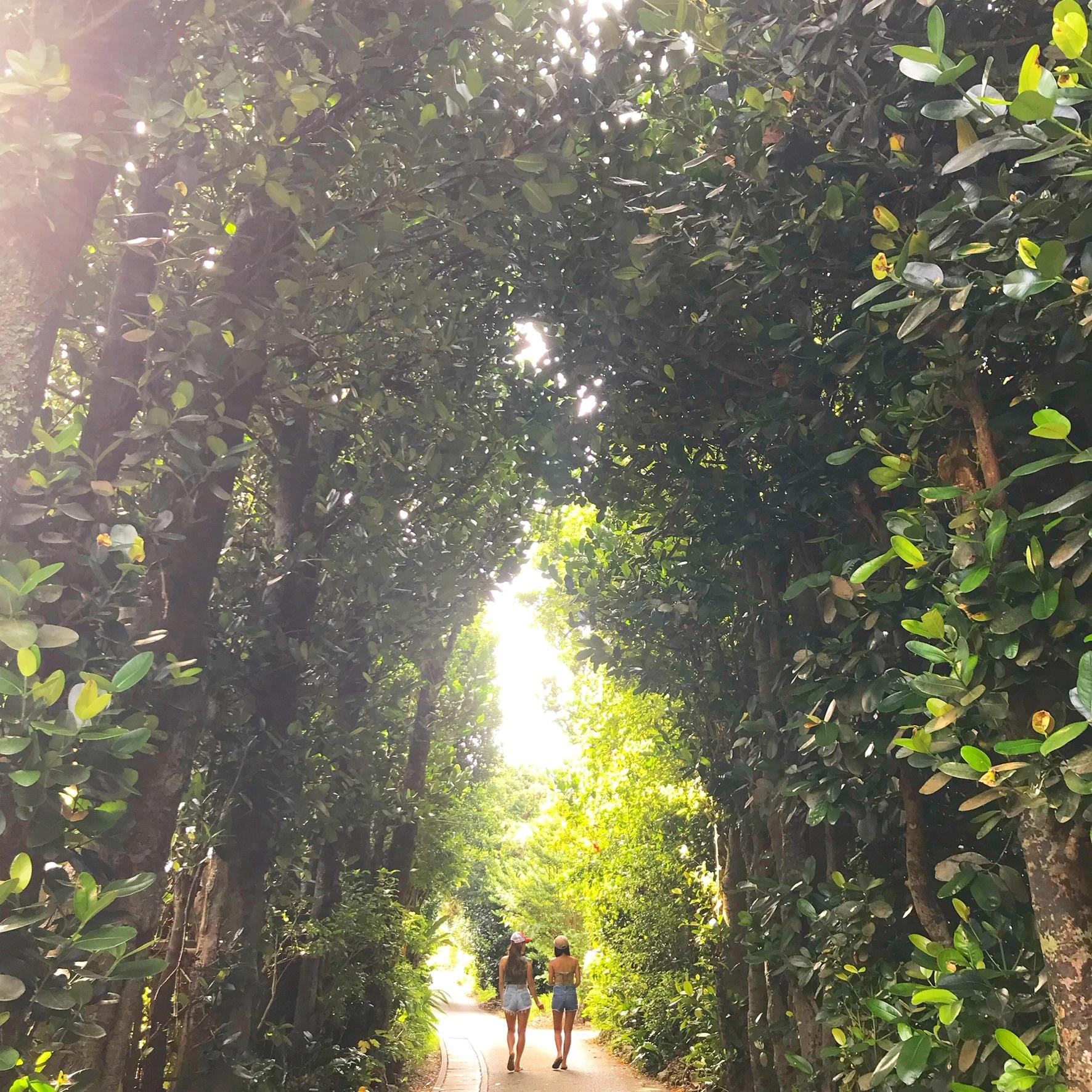 森の中の道を歩く二人の女性