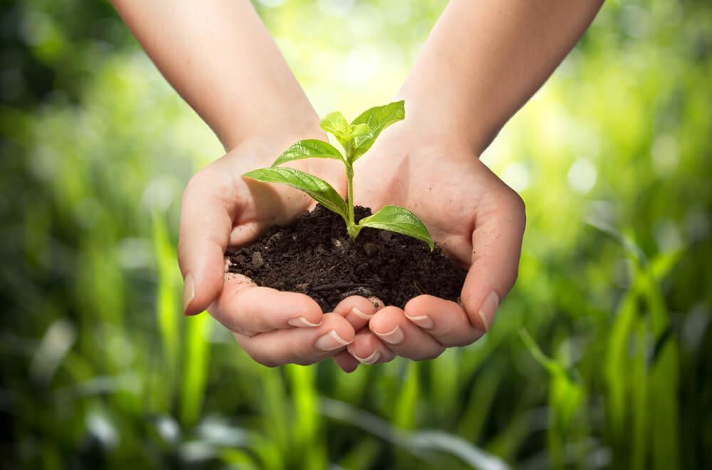 植物の芽を持つ手