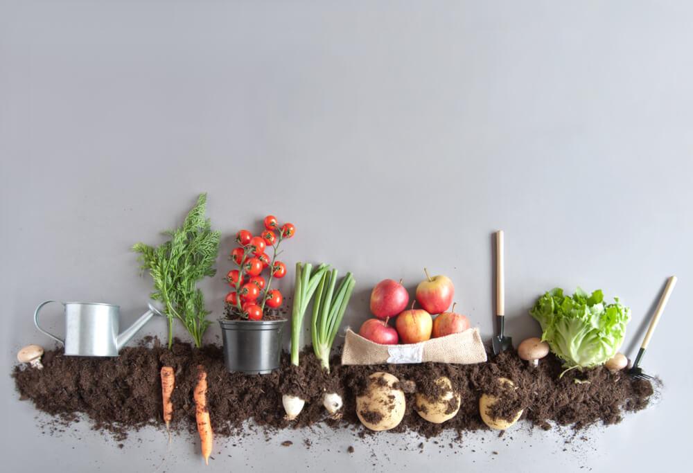 土と複数の野菜