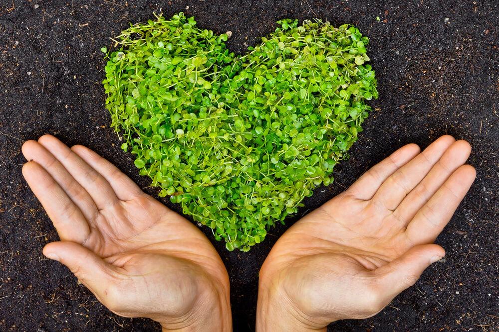 植物のハートに手を添える