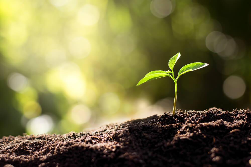 土から芽を出す植物