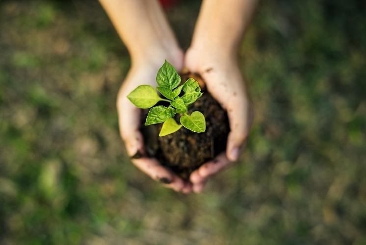 手の上の土と新芽