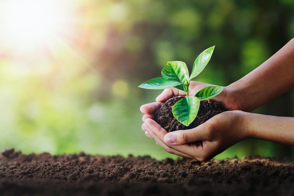 両手に植物を持つ