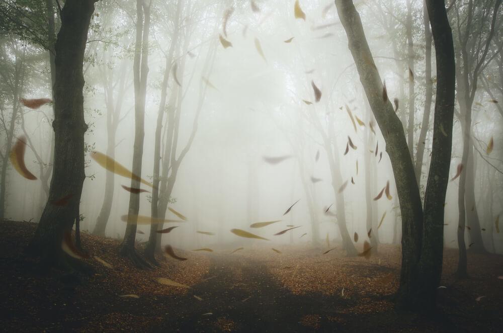 風で舞い上がる森の木の葉