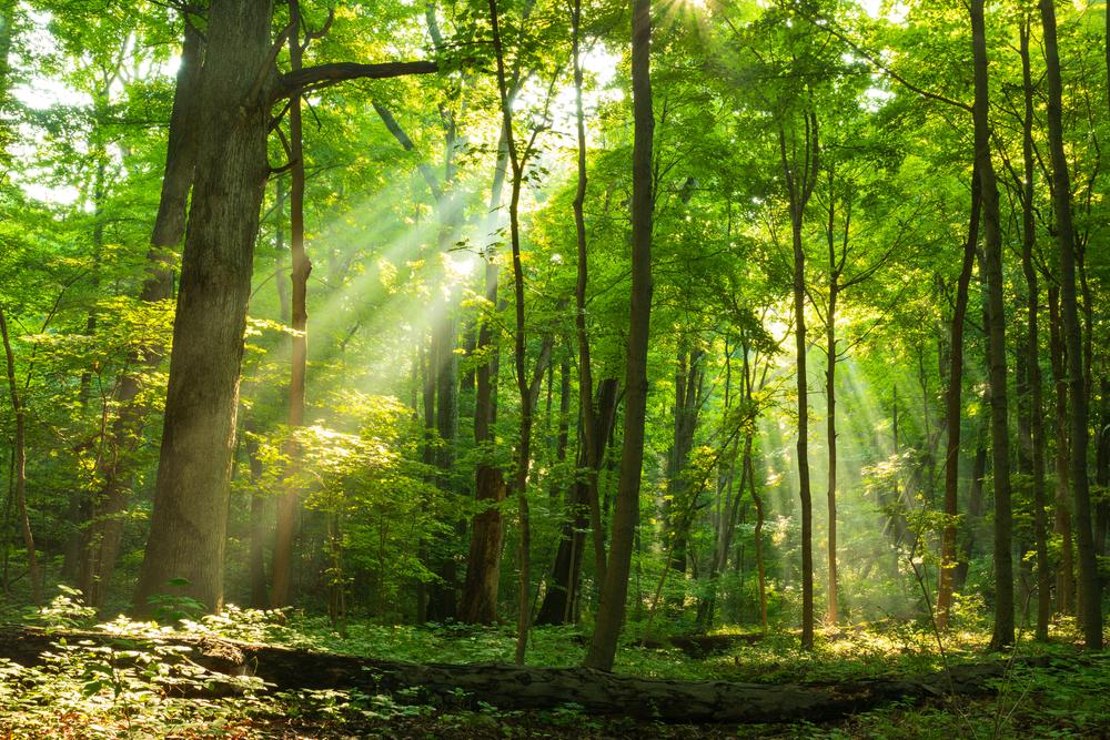 木漏れ日が差し込む森